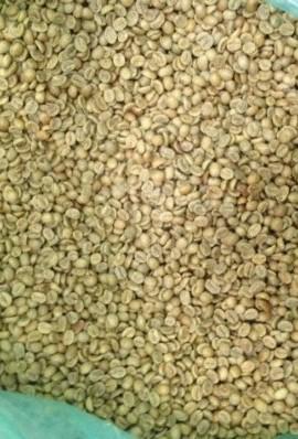 5LBS-Costa-Rica-Tarrazu-Unroasted-Green-Coffee-Beans-0-0