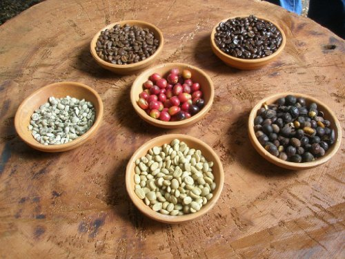Beans honduras comsa marcala shg fair trade organic coffee beans 50